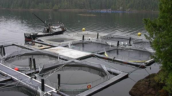 Монтаж рыбных ферм